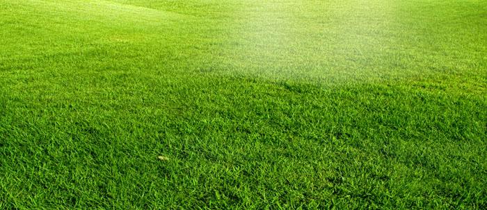 壁纸 草原 成片种植 风景 植物 种植基地 桌面 700_303
